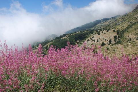 Horsh Ehden Nature Reserve in June @Magda Bou Dagher Kharrat
